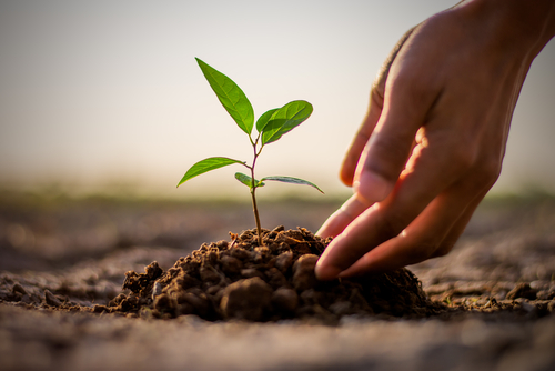 Creating new life is a cathartic and environmentally friendly way to memorialize your loved one after they have passed. (Shutterstock)