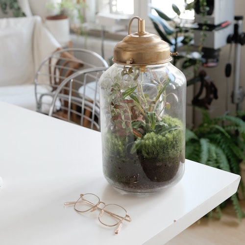 Building a terrarium is a great way to regain control and build new life after a death. (Unsplash/Louis Mornaud)