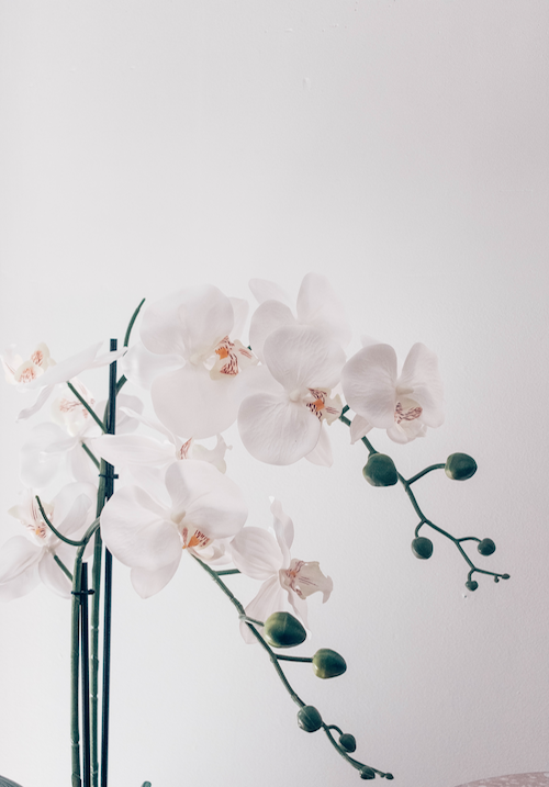 Orchids are known as a difficult plant to keep alive, but plant death is part of the hobby. (Unsplash/Jess @ Harper Sunday)