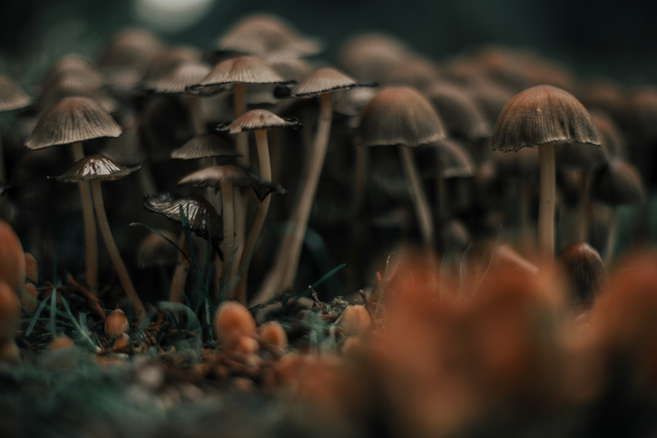 Mushrooms could be the future of burial. Coeio's burial suit offers a waste-free way to lay the dead to rest. (Getty Images)
